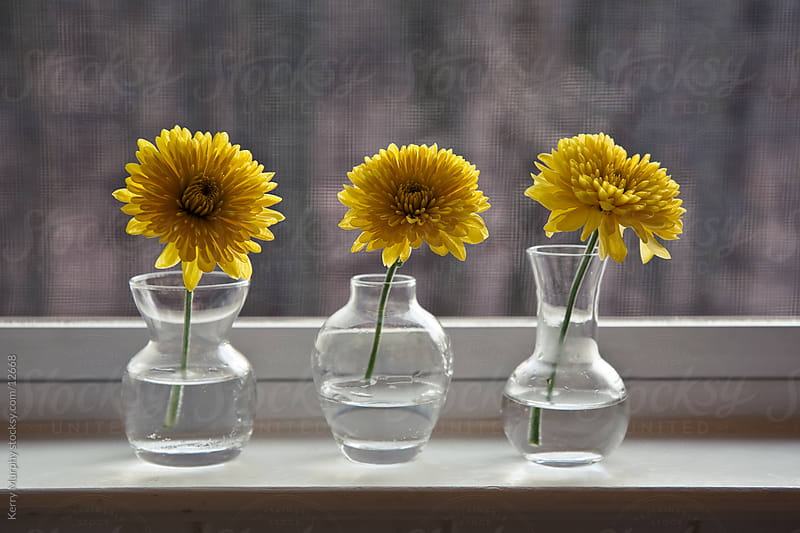 Yellow flowers in vase by window by Kerry Murphy for Stocksy United
