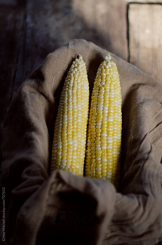 corn by Crissy Mitchell for Stocksy United