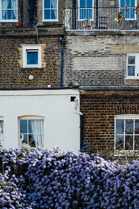 English Style Houses With Purple Flowers in Front of it by Katarina Radovic for Stocksy United