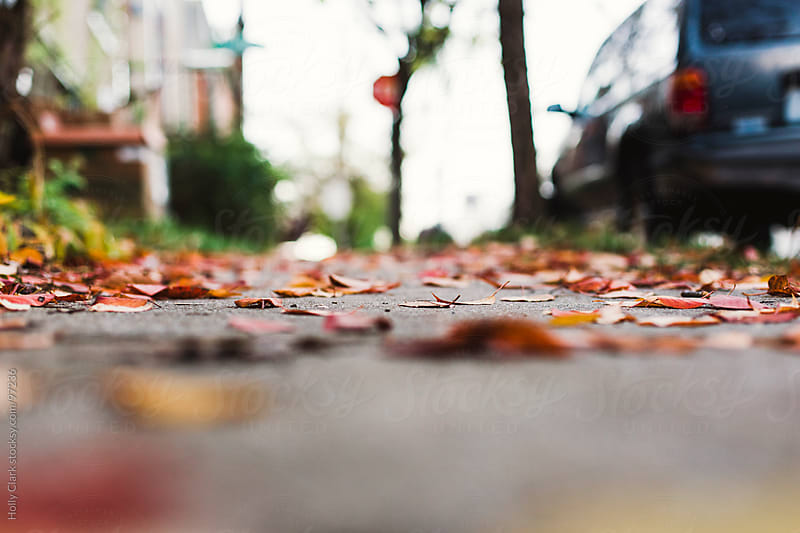 Colorful leaves on a sidewalk next to a parked car. by Holly Clark for Stocksy United