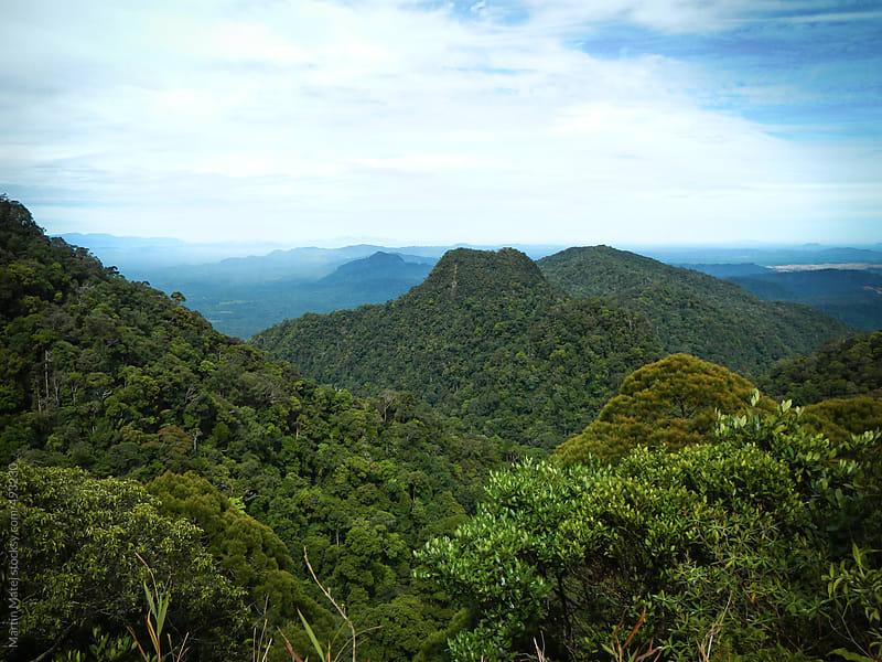 Hills in Kubah national park by Martin Matej for Stocksy United