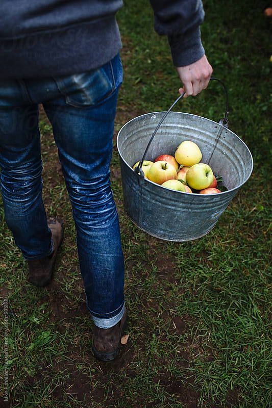 Apple Picking by luke + mallory leasure for Stocksy United