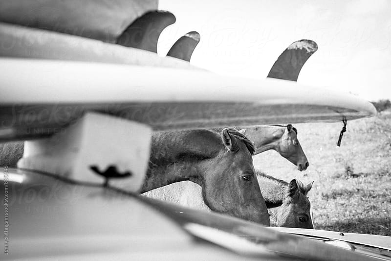 Horse family and Surfboards by Jenny Sathngam for Stocksy United