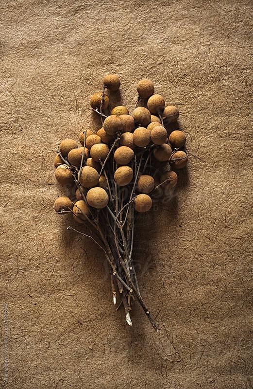Longan Fruit by Marija Savic for Stocksy United