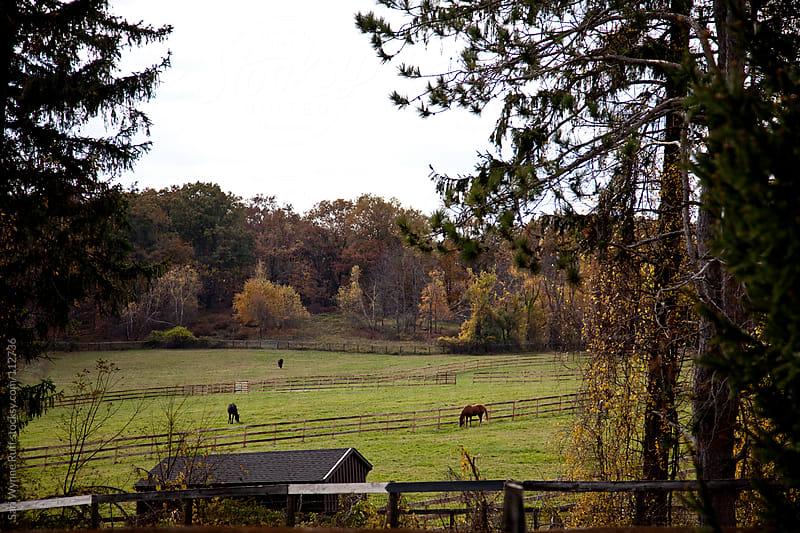 Landscape of Horse Field by Sari Wynne Ruff for Stocksy United