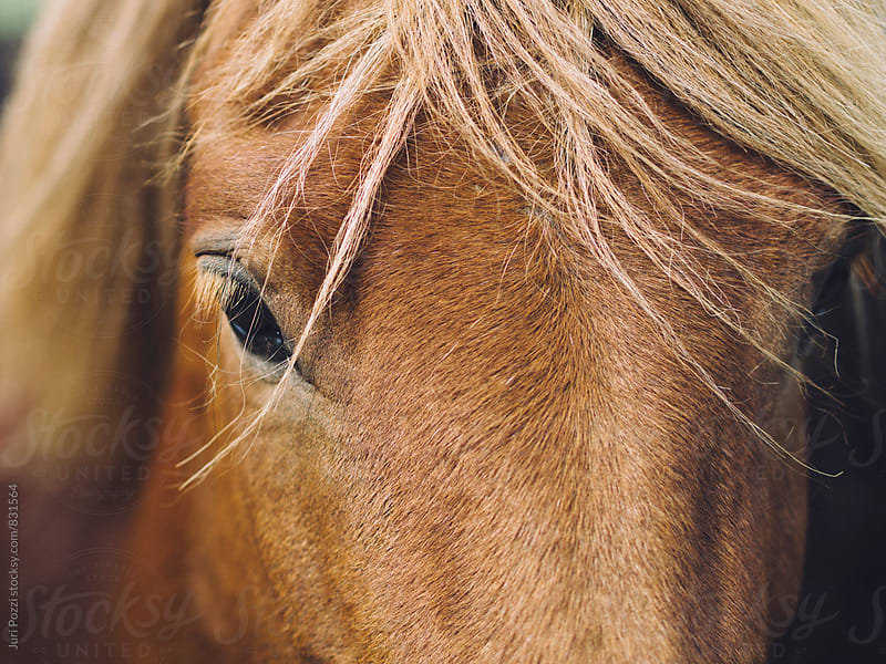 detail of a brown horse by Juri Pozzi for Stocksy United
