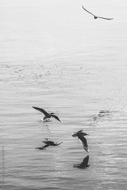 Two seagulls above the water by Igor Madjinca for Stocksy United