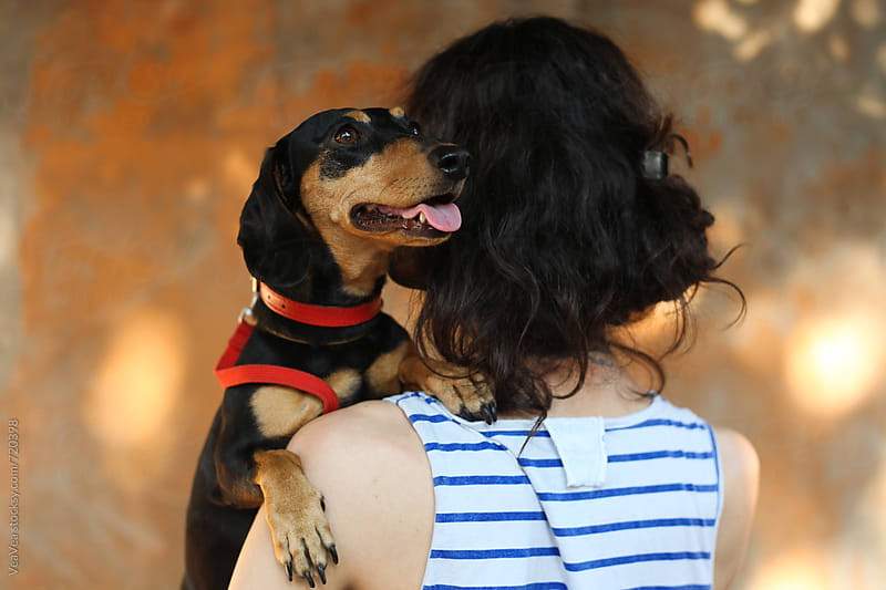 Cute black dachshund leaned on a woman's shoulder  by Marija Mandic for Stocksy United
