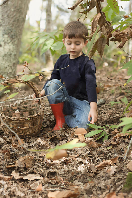 Boy found porcini mushroom in the forest by Beatrix Boros for Stocksy United