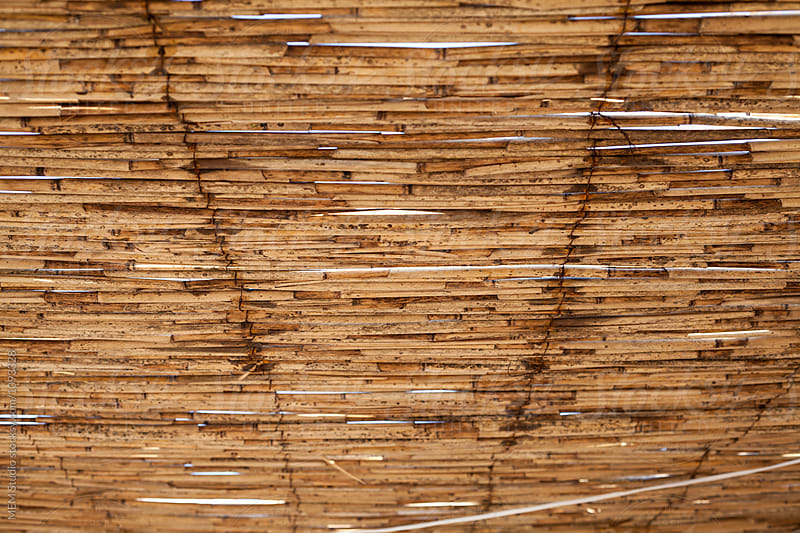 Reed surface by MEM Studio for Stocksy United