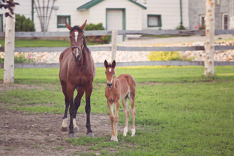Brown horse with white diamond on head and her young foal standing beside each other by anya brewley schultheiss for Stocksy United