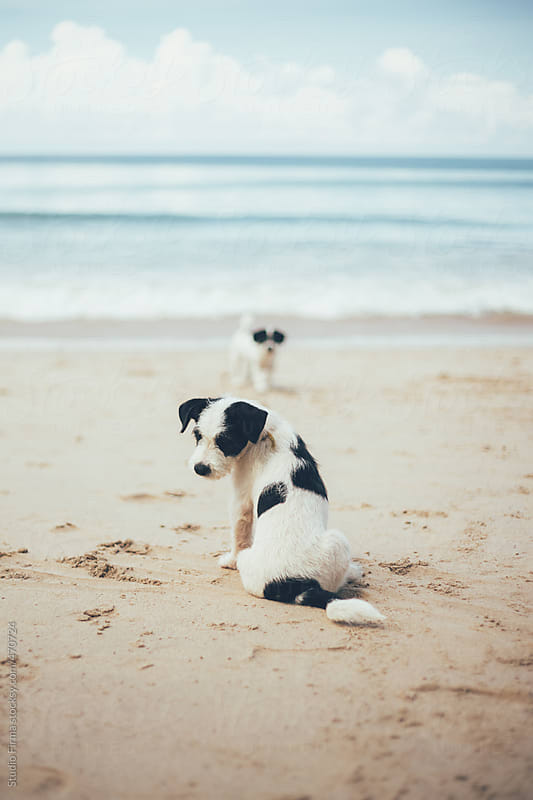 Two dogs on the beach by Studio Firma for Stocksy United