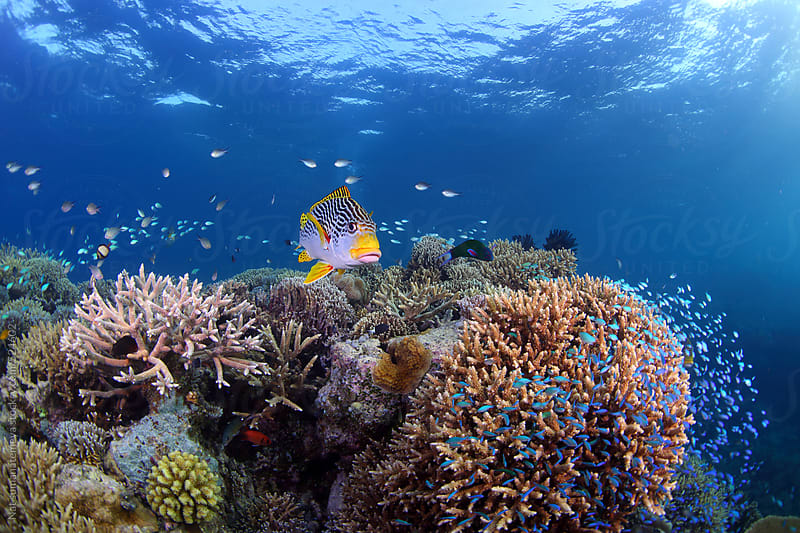 Coral reef by Nat sumanatemeya for Stocksy United