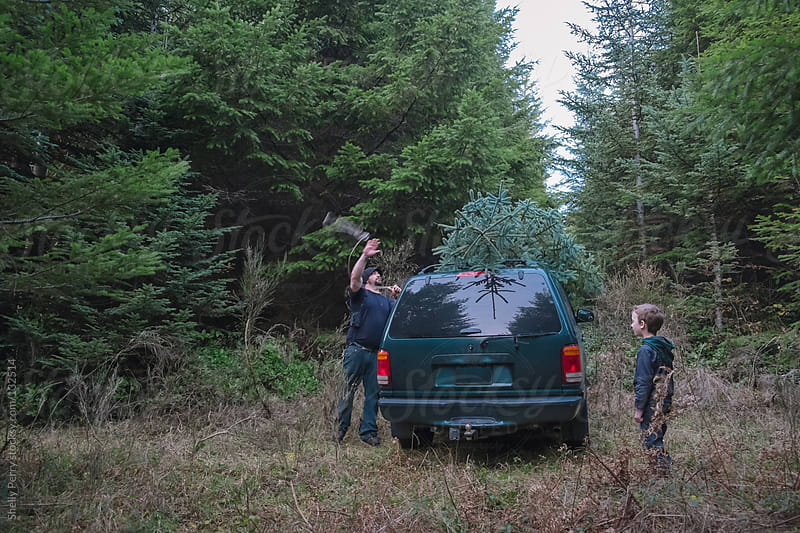 Dad tying the Christmas tree onto the vehicle while young son watches by Shelly Perry for Stocksy United