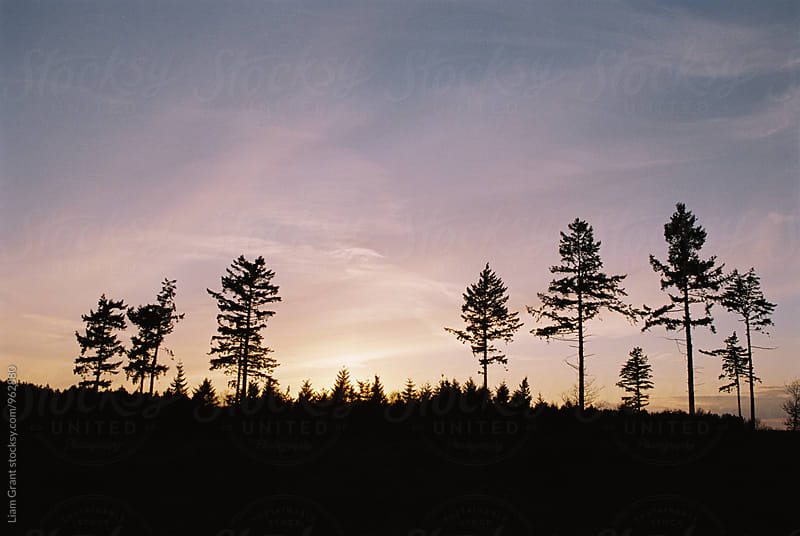 Trees silhouetted against a sunset sky. Norfolk, UK. by Liam Grant for Stocksy United