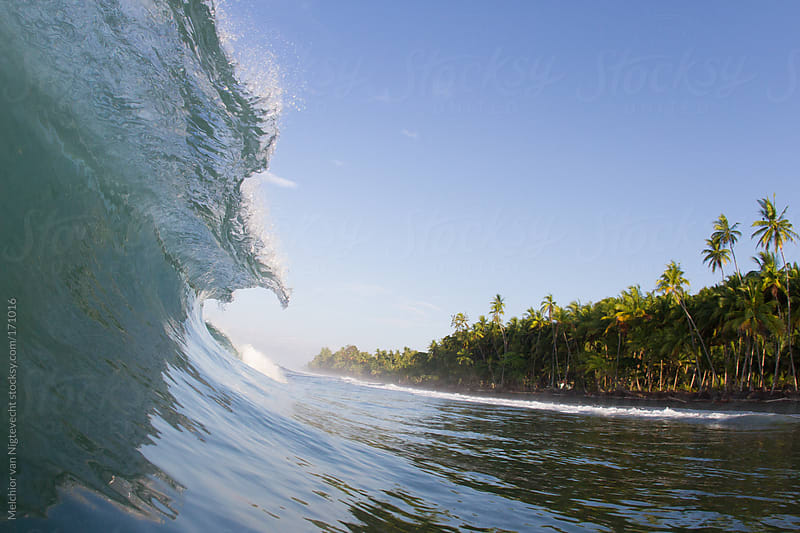 Breaking hollow wave in the tropics with a palmtree shoreline by Melchior van Nigtevecht for Stocksy United