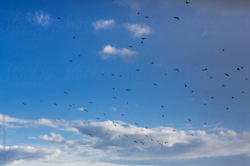 Flock of black birds flying through blue sky by Lior + Lone for Stocksy United