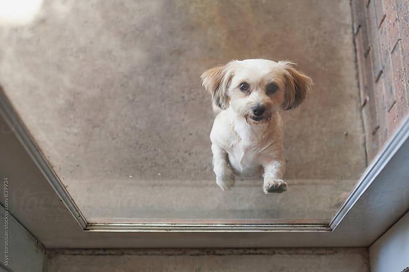 Let me inside! by skye torossian for Stocksy United