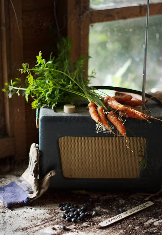 Freshly dug carrots on a potting bench with a vintage radio by Helen Rushbrook for Stocksy United