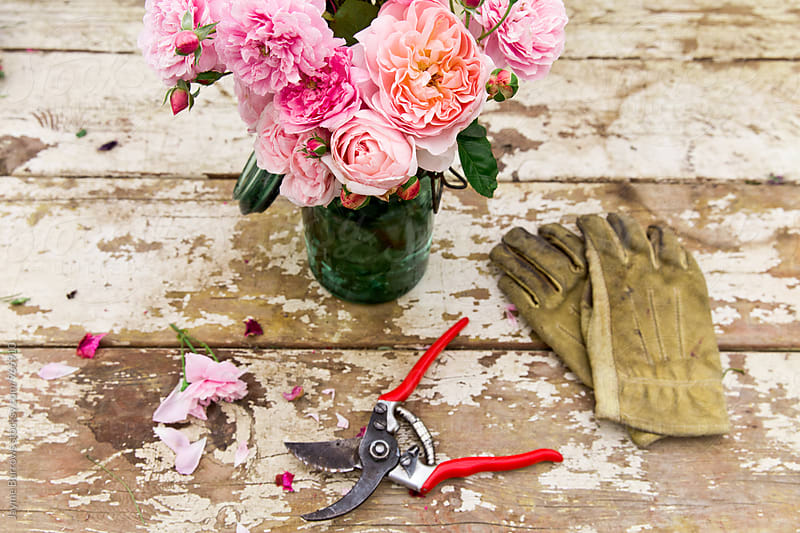 Varieties of Pink Roses by Jayme Burrows for Stocksy United