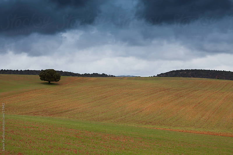 Landscape with lonely tree under the storm by Javier Pardina for Stocksy United
