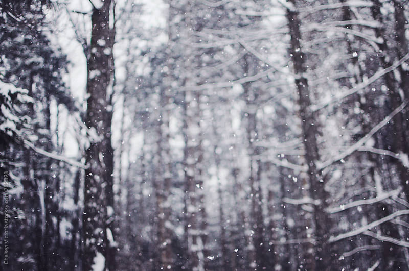 Trees and snow in a forest by Chelsea Victoria for Stocksy United
