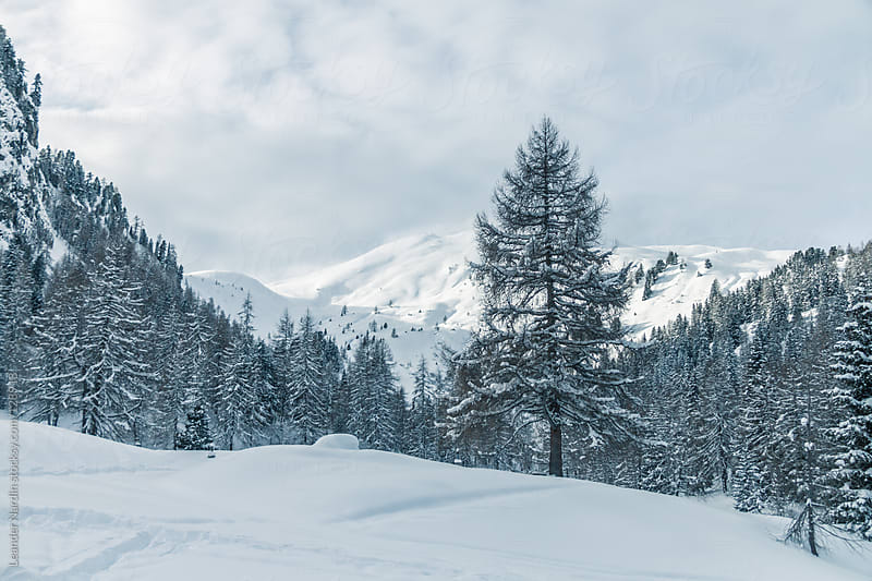 winterlandscape in the austrian alps by Leander Nardin for Stocksy United