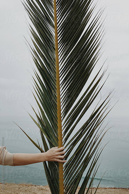palm tree branch by Nate & Amanda Howard for Stocksy United