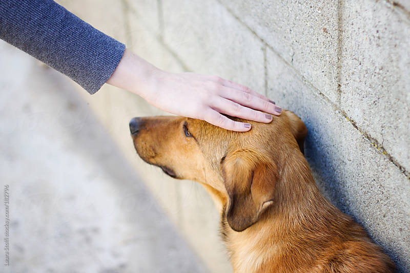 Feminine hand caressing yellow puppy dog's head by Laura Stolfi for Stocksy United