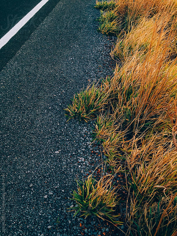 Overhead Shot of Grass Growing Roadside by Julien L. Balmer for Stocksy United
