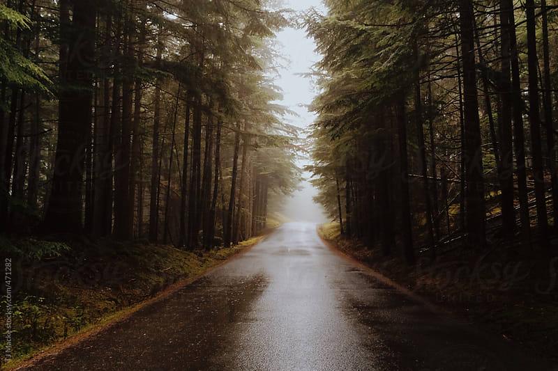 A foggy road running through the woods by TJ Macke for Stocksy United