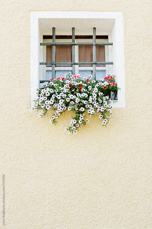 Pretty small window with flowers by Amir Kaljikovic for Stocksy United