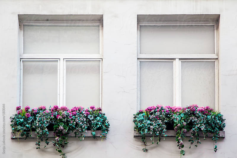 white windows with flowers by Sonja Lekovic for Stocksy United