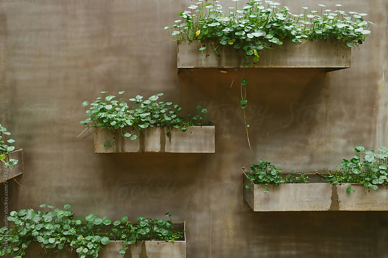 plants on the wall of a pool by MaaHoo Studio for Stocksy United