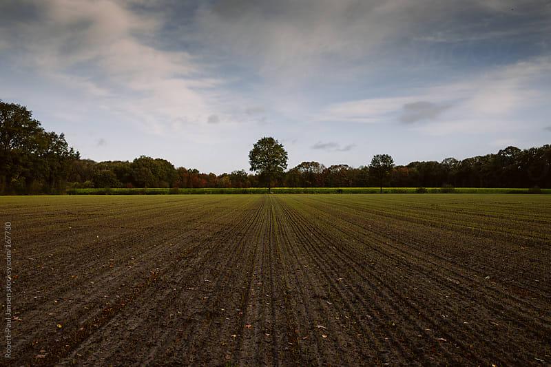 So Lonely by Robert-Paul Jansen for Stocksy United