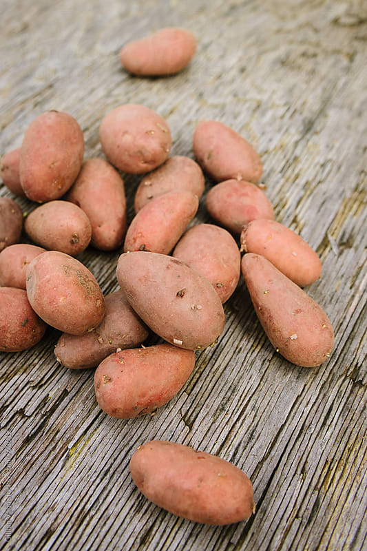 organic pink potatoes by Gillian Vann for Stocksy United