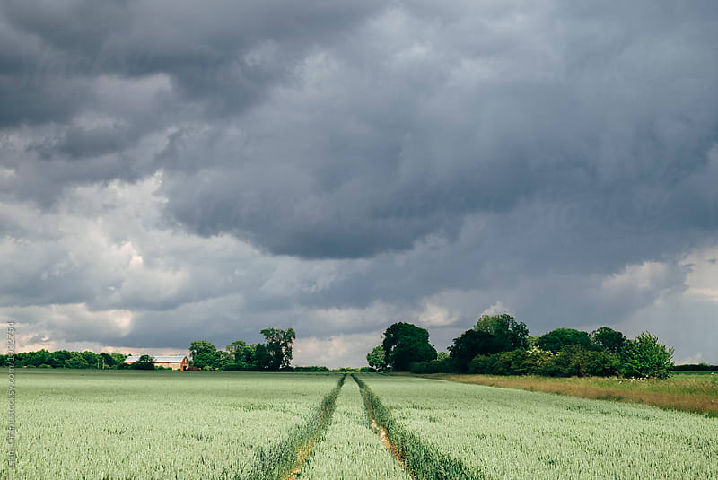 Rain storm clouds over a barn and field of wheat. Norfolk, UK. by Liam Grant for Stocksy United