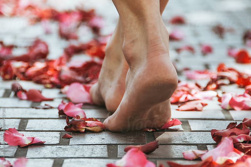 Woman walking barefoot on red roses petals.  by Jovo Jovanovic for Stocksy United