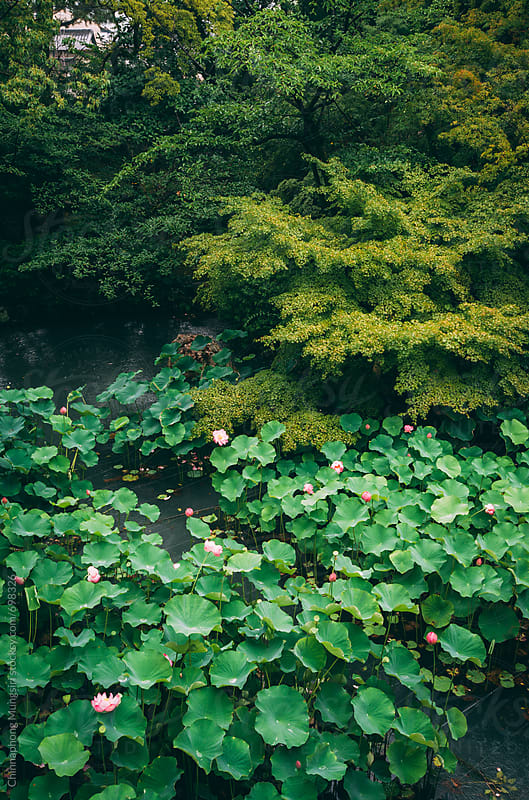 Lotus pond in Japanese temple, Kyoto by Chinnaphong Mungsiri for Stocksy United