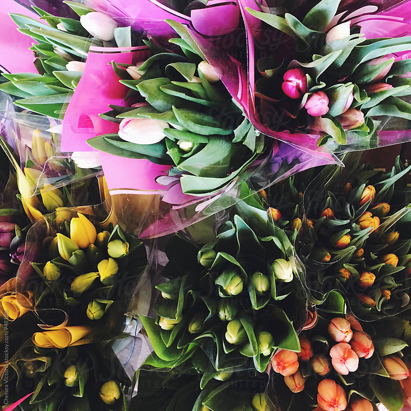 Fresh Tulips from the Farmers Market by Chelsea Victoria for Stocksy United