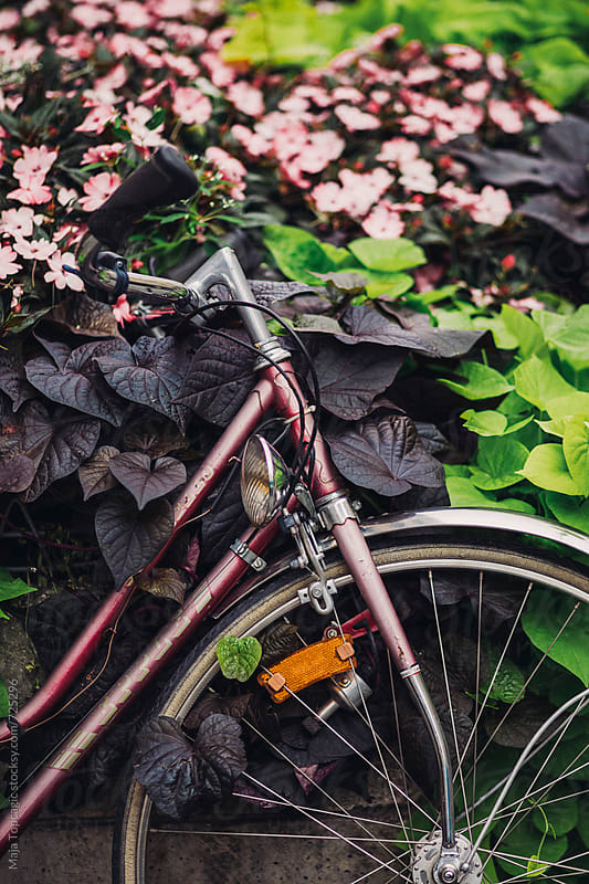 Vintage bike parked in flowers by Maja Topcagic for Stocksy United