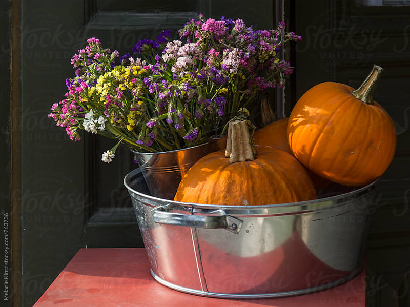 Pumpkins and strawflowers in a bowl by Melanie Kintz for Stocksy United