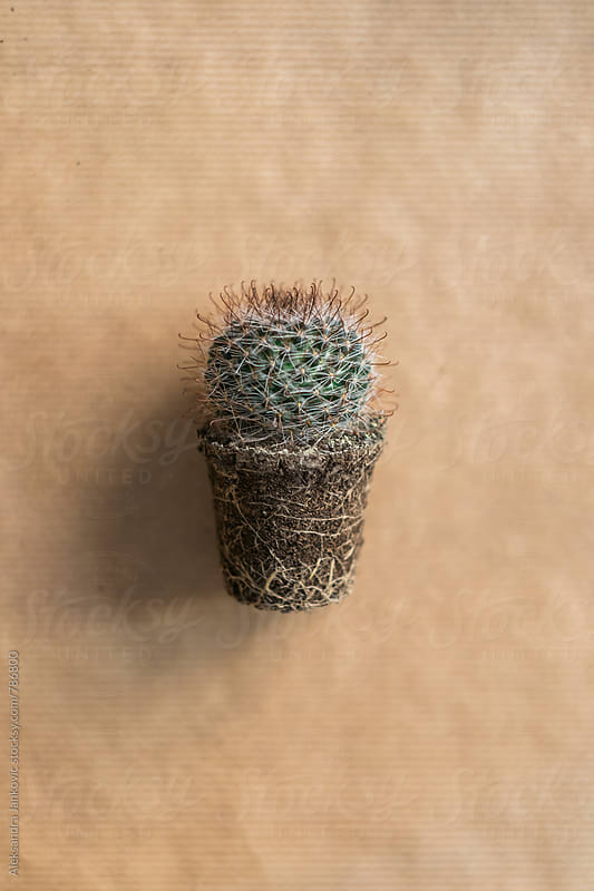 Small Cactus  by Aleksandra Jankovic for Stocksy United
