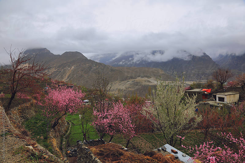 Blossom, Spring and clouds in valley by Yasir Nisar for Stocksy United