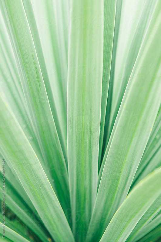 Close up view of a green plant, New Zealand. by Thomas Pickard for Stocksy United