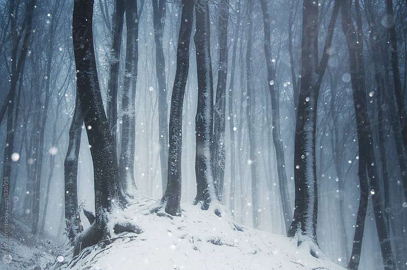 Winter forest with snow on Christmas day by Cosma Andrei for Stocksy United