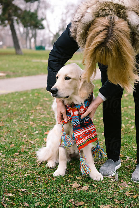 Woman Putting Scarf on Dog  by Studio Six for Stocksy United