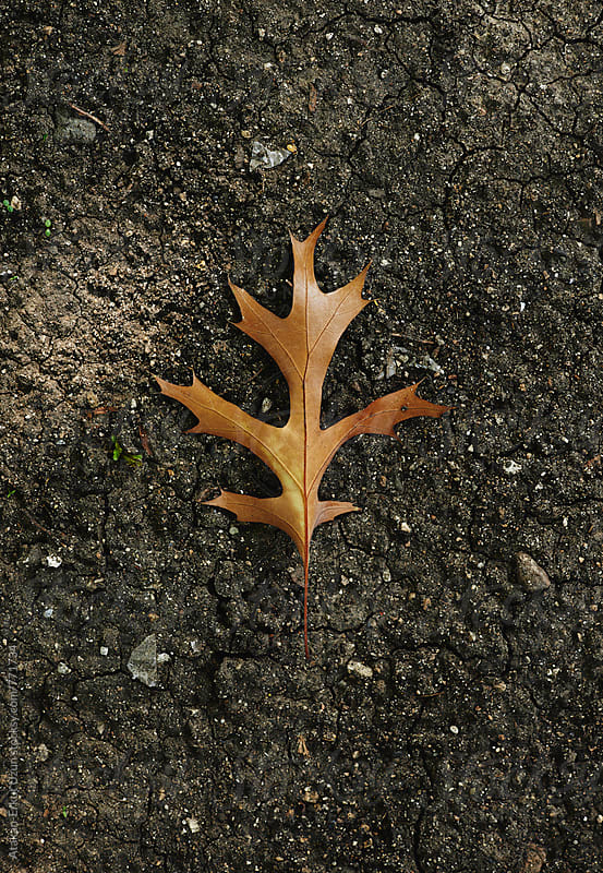 leaf on dry soil by Atakan-Erkut Uzun for Stocksy United