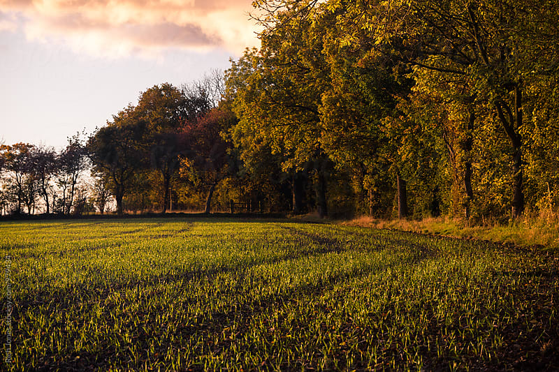 Tree line at fields edge by Rich Jones for Stocksy United