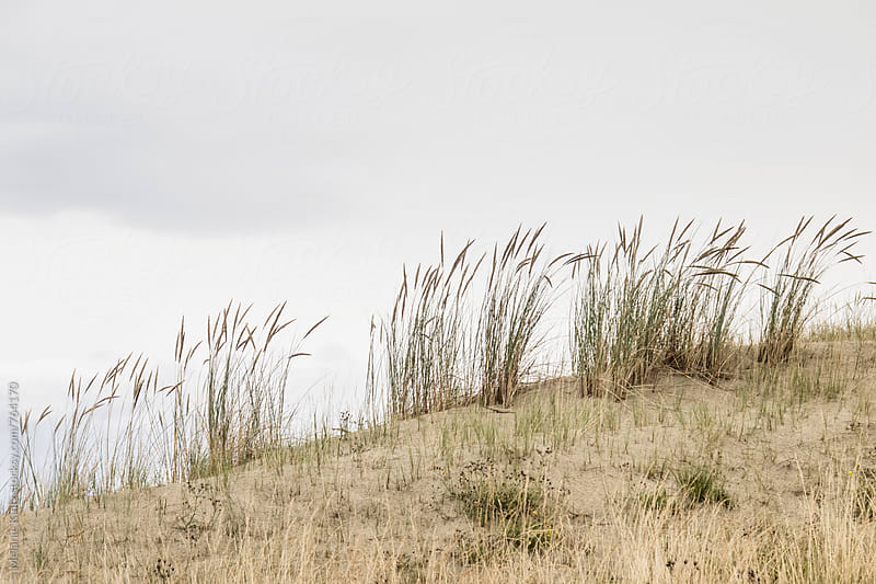 Grass on dunes on a cloudy day by Melanie Kintz for Stocksy United